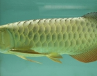 调节鱼缸水质常见四种方法