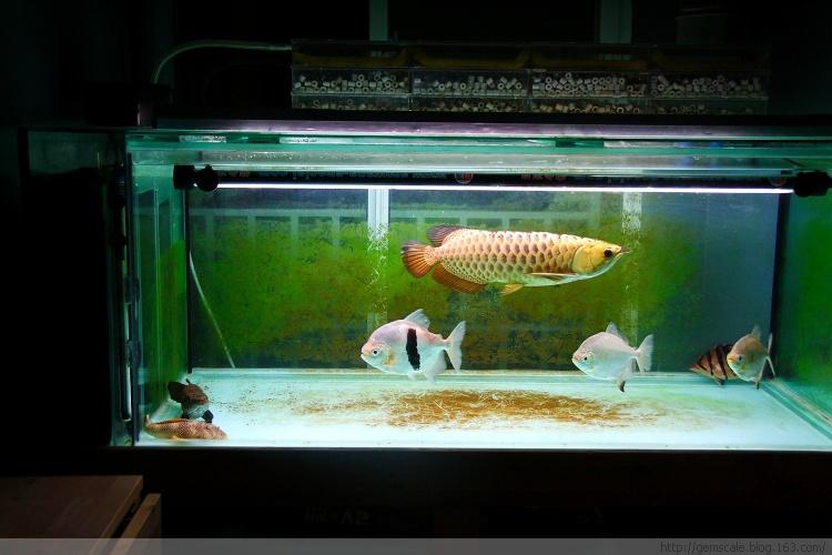 金优德88com-鱼乐汇