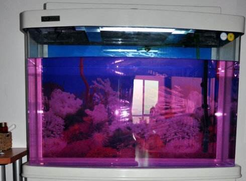 优德88com缸消毒高锰酸钾-鱼乐汇